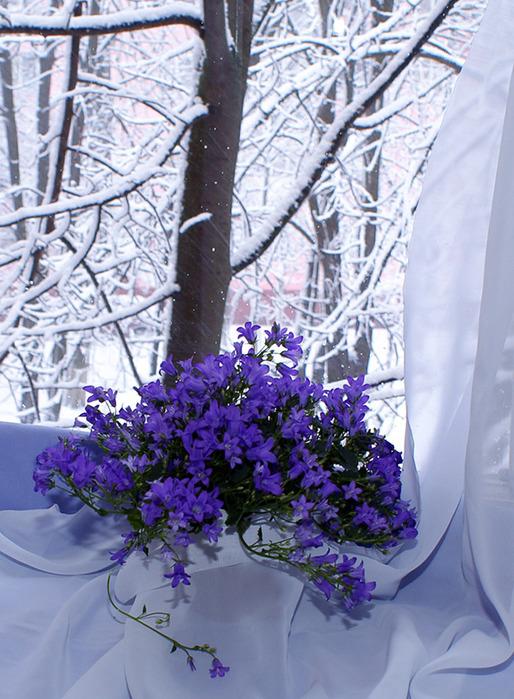 белая ночь весна не прошла