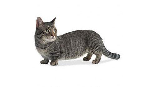 кошка 1 (500x280, 31Kb)