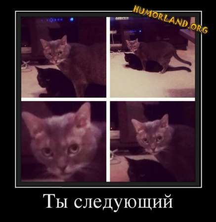 1385206557_humorland.org_demotivator_tyi-sleduyuschij (437x450, 88Kb)