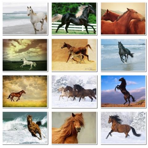 horse 1-2 (480x480, 187Kb)