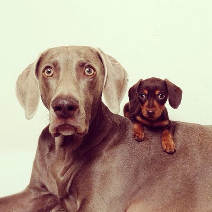 смешные собаки фото 1 (680x680, 227Kb)