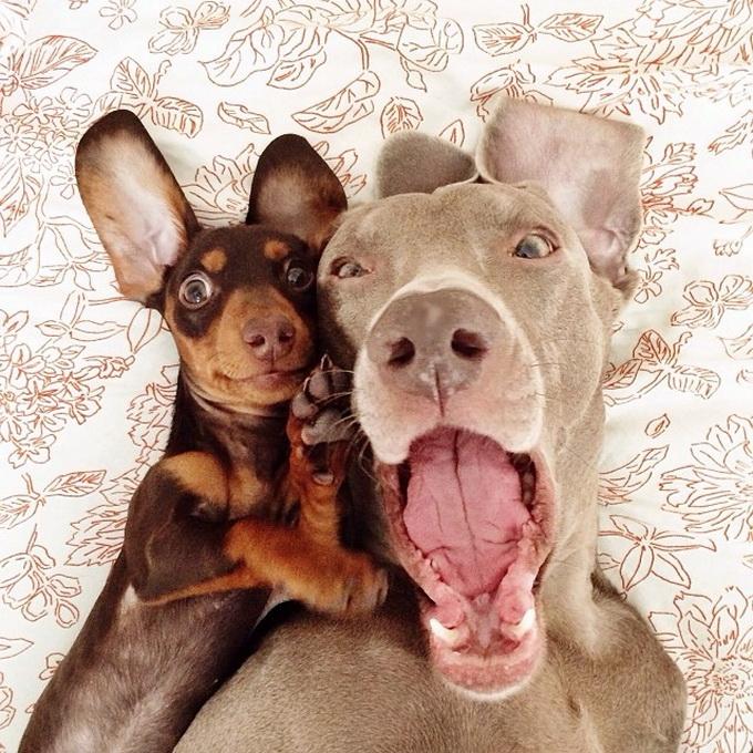 смешные собаки фото 4 (680x680, 398Kb)