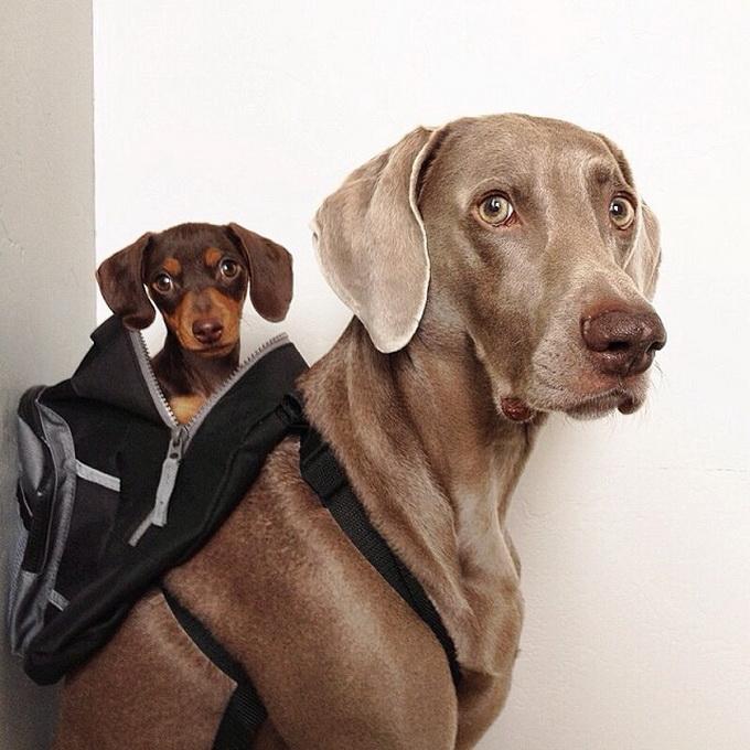 смешные собаки фото 7 (680x680, 262Kb)