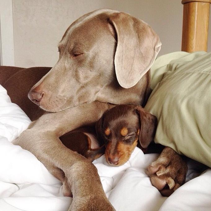 смешные собаки фото 8 (680x680, 266Kb)