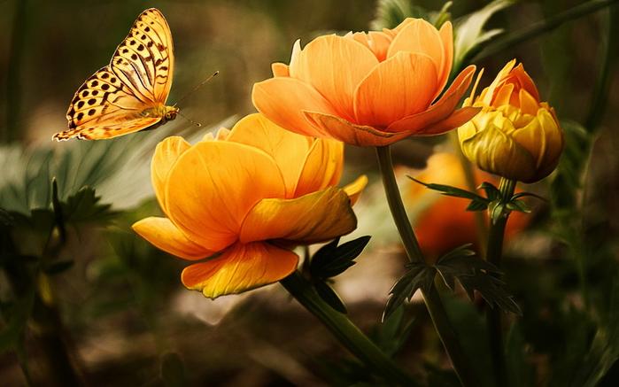 Красивые фото про цветы