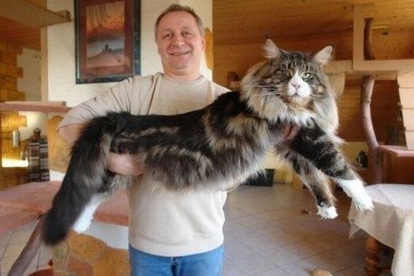 котоматрица огромные коты/1386120466_novosti_byvajut_raznye_1 (600x400, 37Kb)
