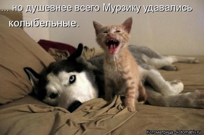 kotomatritsa_l1 (700x464, 186Kb)