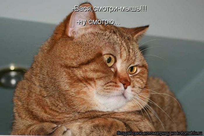 kotomatritsa_P3 (700x465, 190Kb)