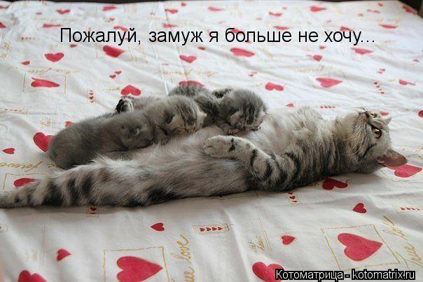 kotomatritsa_Qy (604x403, 119Kb)