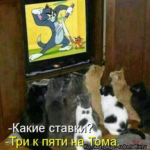 kotomatritsa_Wb (480x480, 114Kb)