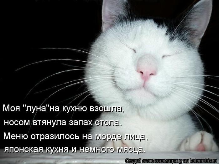 kotomatritsa_yJ (700x524, 181Kb)