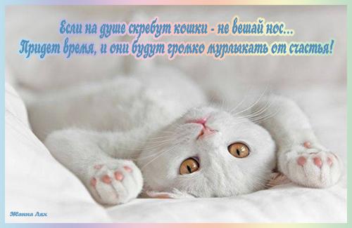 107526366_esli_v_dushe_skrebut_koshki_ne_veshay_nos (500x325, 170Kb)
