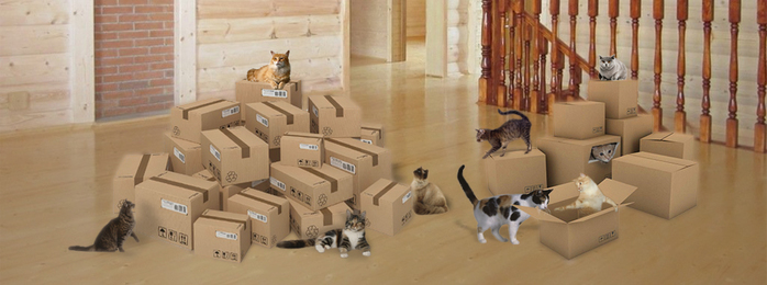 cats_boxes (700x260, 154Kb)