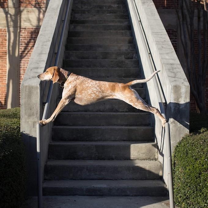 балансирующая собака мэдди фото (680x680, 260Kb)