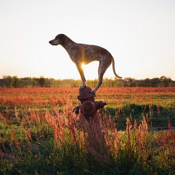 балансирующая собака мэдди фото 2 (680x680, 292Kb)