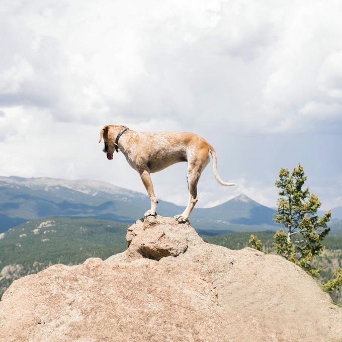 балансирующая собака мэдди фото 4 (680x680, 220Kb)