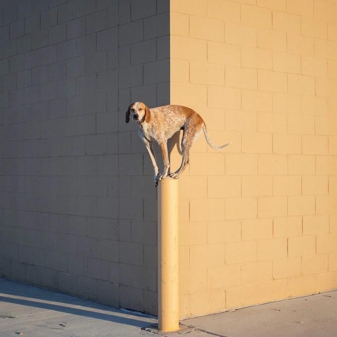 балансирующая собака мэдди фото 6 (680x680, 134Kb)