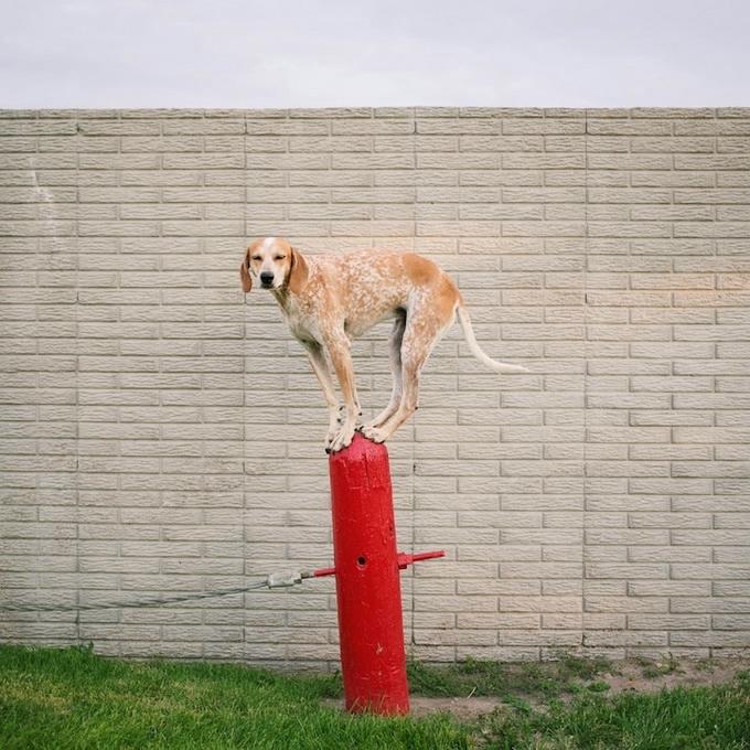 балансирующая собака мэдди фото 8 (680x680, 310Kb)