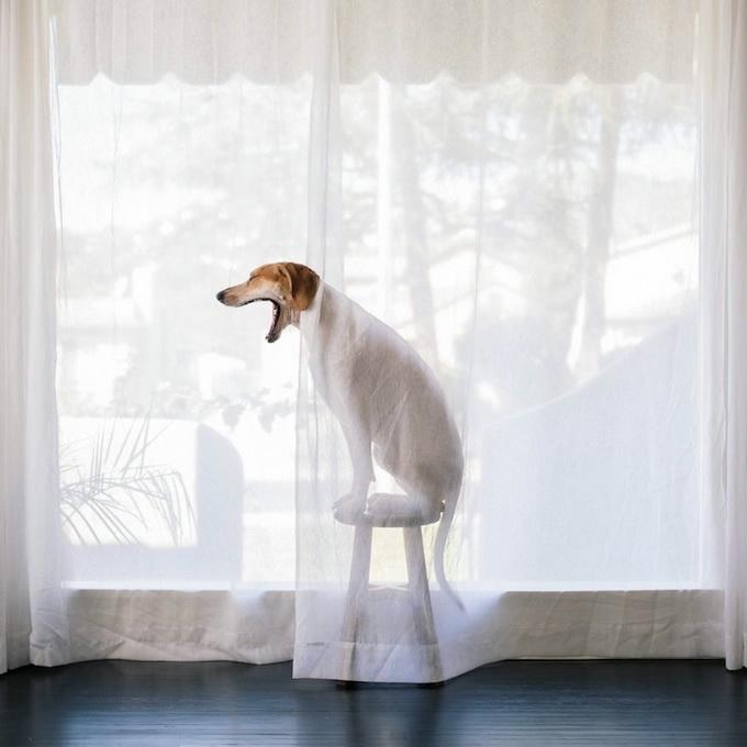 балансирующая собака мэдди фото 10 (680x680, 131Kb)