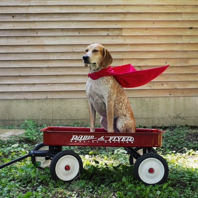 балансирующая собака мэдди фото 12 (680x680, 294Kb)