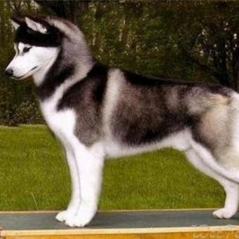 собаки3 (341x341, 85Kb)