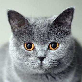 кошки3 (341x341, 90Kb)