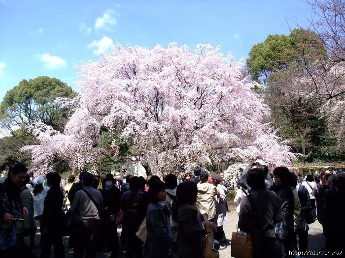 Сад Рикугиэн Rikugien garden (яп. 六義園 Рикугиэн) 19 (700x525, 349Kb)