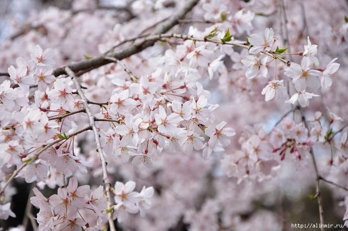 Сад Рикугиэн Rikugien garden (яп. 六義園 Рикугиэн) 10 (700x464, 240Kb)