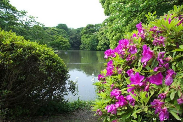 Сад Рикугиэн Rikugien garden (яп. 六義園 Рикугиэн) 6 (700x467, 342Kb)