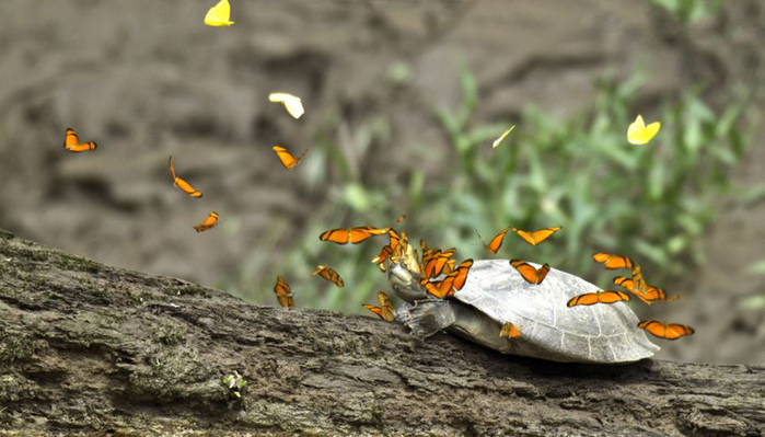 Черепахи фото 1 (700x399, 273Kb)