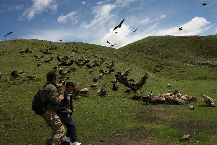 обряд небесного погребения тибет1 (699x466, 150Kb)