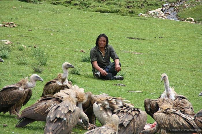 обряд небесного погребения тибет 9 (700x467, 322Kb)
