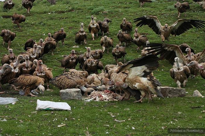 обряд небесного погребения тибет 17 (700x467, 336Kb)