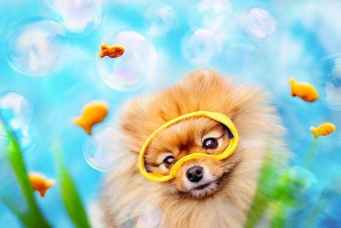 смешные фото собак 1 (680x455, 169Kb)