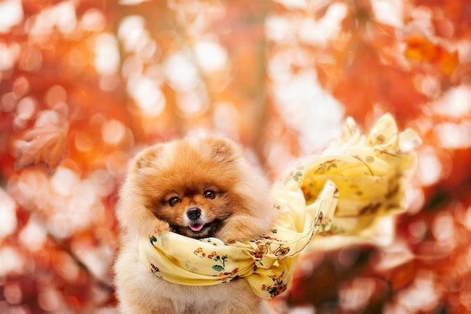 смешные фото собак 7 (680x454, 183Kb)