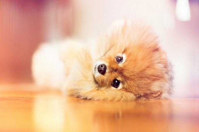 смешные фото собак 8 (680x454, 135Kb)