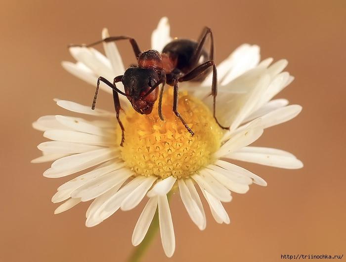 Потрясающее макро! Из жизни муравьишки!