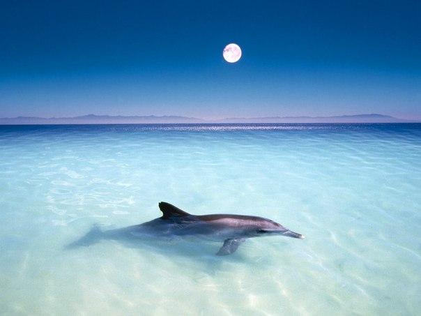 дельфин1 (604x453, 33Kb)