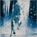 3815384_1292437668_winter_woods_by_cynnaliad32mlq0 (156x156, 7Kb)