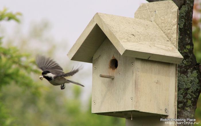 Чем кормить птиц и СКВОРЕЧНИК своими руками (20) (700x440, 205Kb)