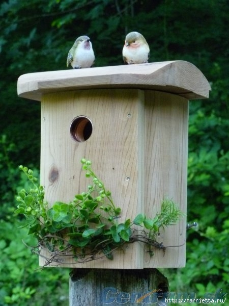 Чем кормить птиц и СКВОРЕЧНИК своими руками (30) (450x600, 148Kb)