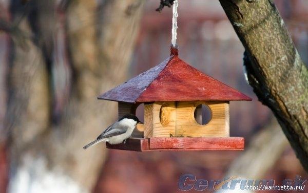 Чем кормить птиц и СКВОРЕЧНИК своими руками (32) (600x377, 108Kb)