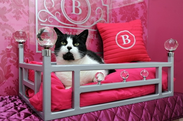 The_Ings_Luxury_Cat_Hotel_Poster_bed (600x399, 88Kb)