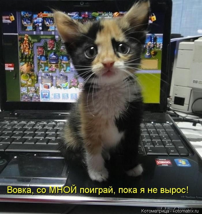kotomatritsa_bC (659x700, 287Kb)