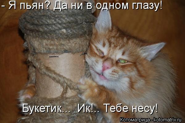 kotomatritsa_CB (600x401, 107Kb)