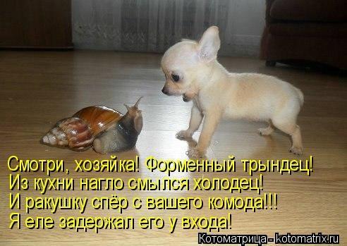 kotomatritsa_j6 (492x349, 99Kb)