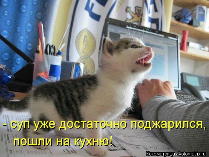 kotomatritsa_uB (700x525, 161Kb)