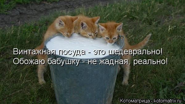 kotomatritsa_Xk (600x339, 102Kb)