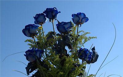 розы - нужное result (1) (400x251, 21Kb)