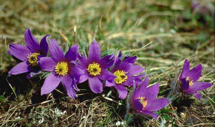 цветы+ (700x415, 67Kb)